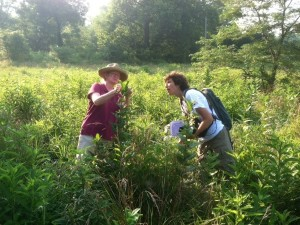 Volunteers on the Phillips Farm begin the hunt for eggs and caterpillars in July 2013.